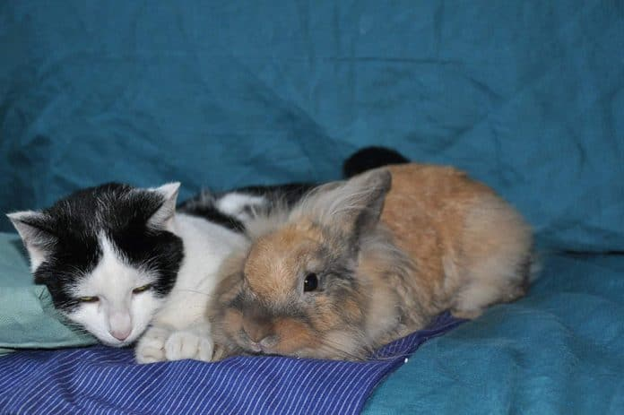 Can Rabbits Live With Cats and Dogs