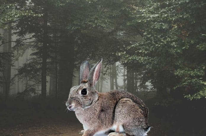 Are Bunnies Rabbits Nocturnal Petsial