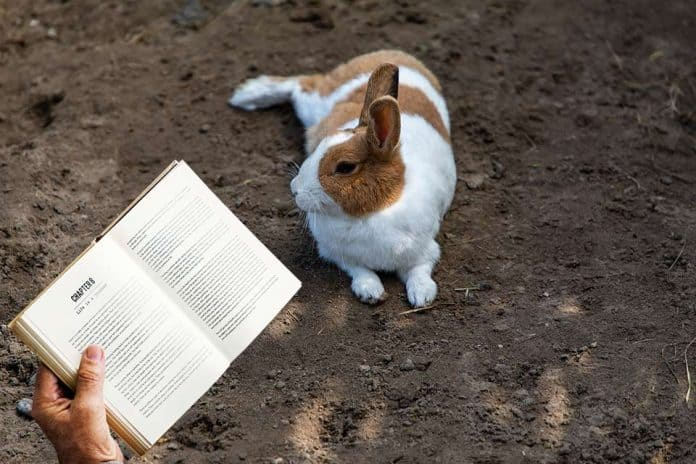 Are Rabbits Smart