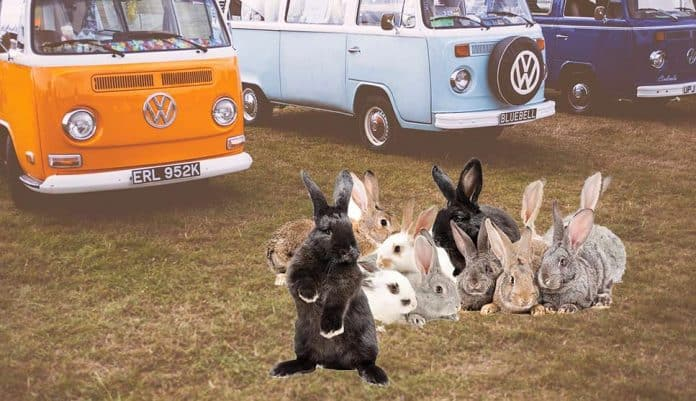 Can Rabbits Get Car Sick Petsial