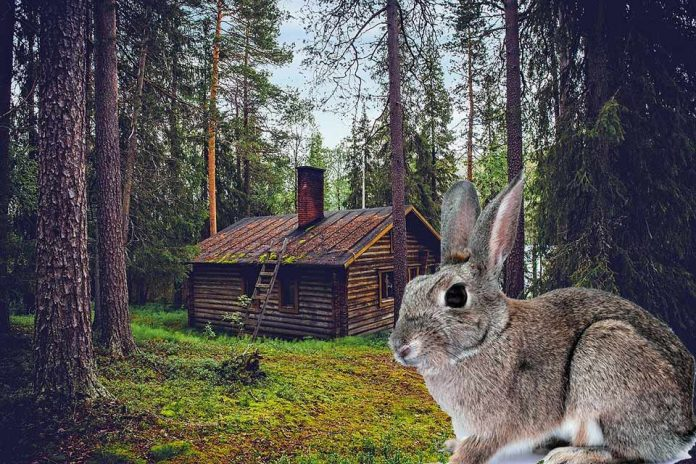 Do Rabbits Have Homing Instinct