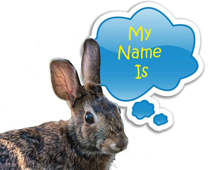 Do Rabbits Know Their Names