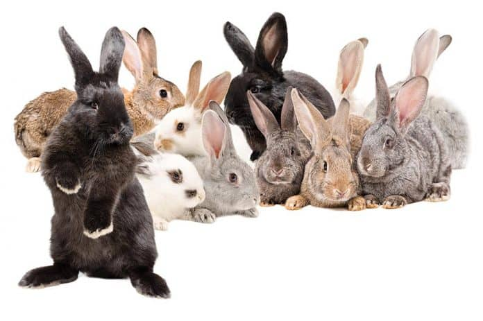 How Do You Pick Out Select A Rabbit