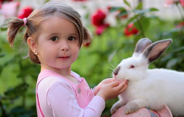 Are Rabbits Affectionate Pets