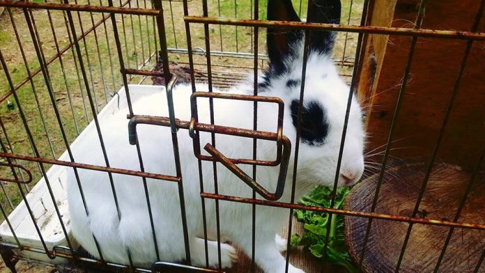 Best Rabbit Cages 23 Tips How To Select The Right One
