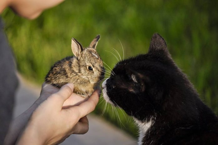 Cats vs rabbits15 Reasons Why A Rabbit Is A Better Pet