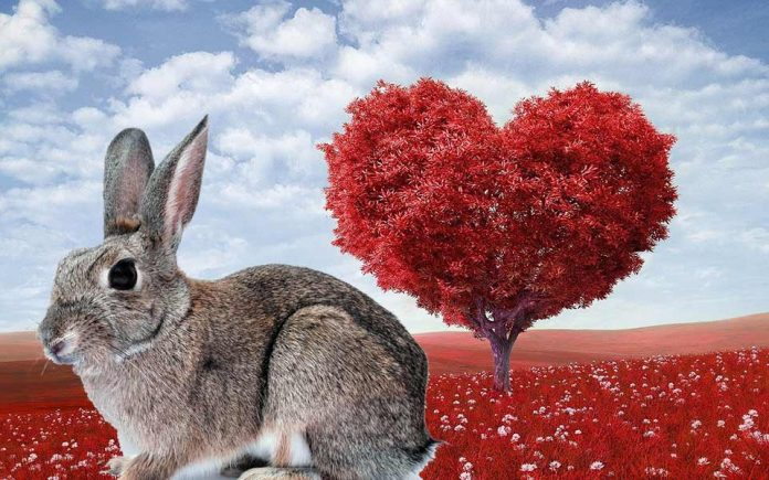 How Do You Know If Your Bunny Pet Rabbit Loves You