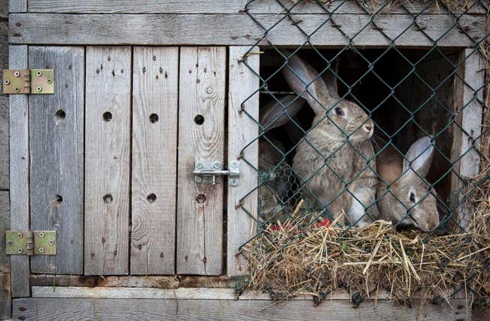 Why A Rabbit Hutch Might Be The Best Choice For You