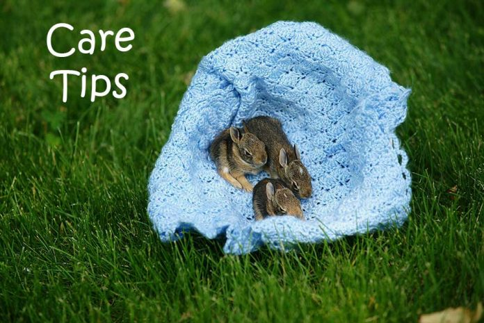 Baby Bunny Care Tips