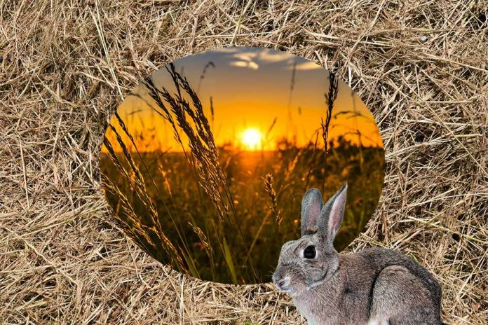 Best Grass and Hay For Rabbits