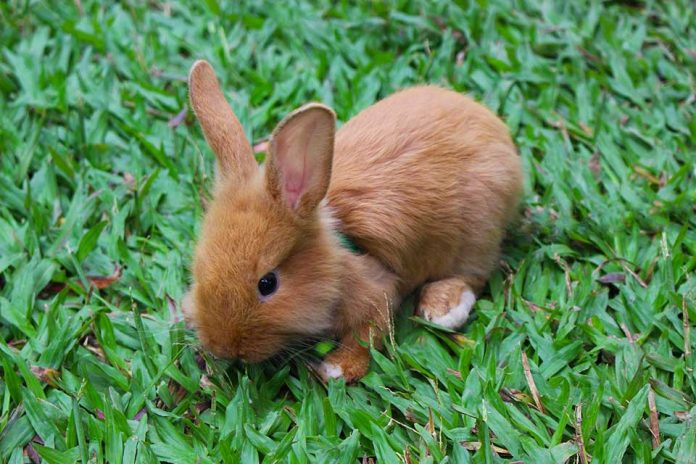 Getting A Pet Rabbit What To Expect 27 Things You Must Know