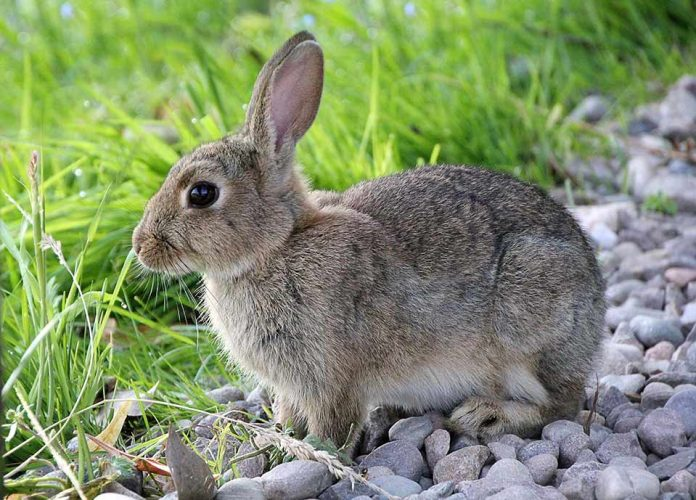 How To Care For A Rabbit Outdoors