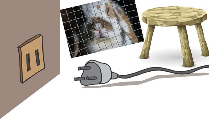 How To Stop Rabbits Chewing Cables Car Wires Furniture Carpet