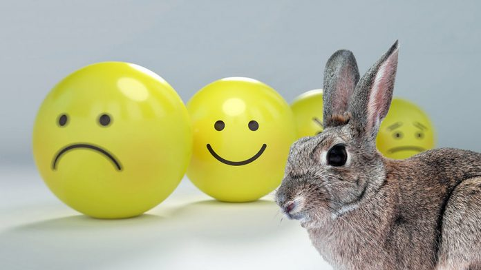 How to Keep A Pet Rabbit Happy