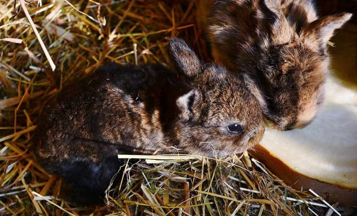 What Do Baby Rabbits Eat and Drink