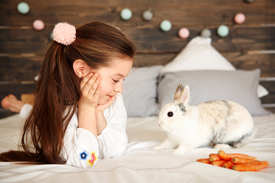 What Do Pet Rabbits Like To Sleep On, How Often Should I Change My Rabbits Bedding