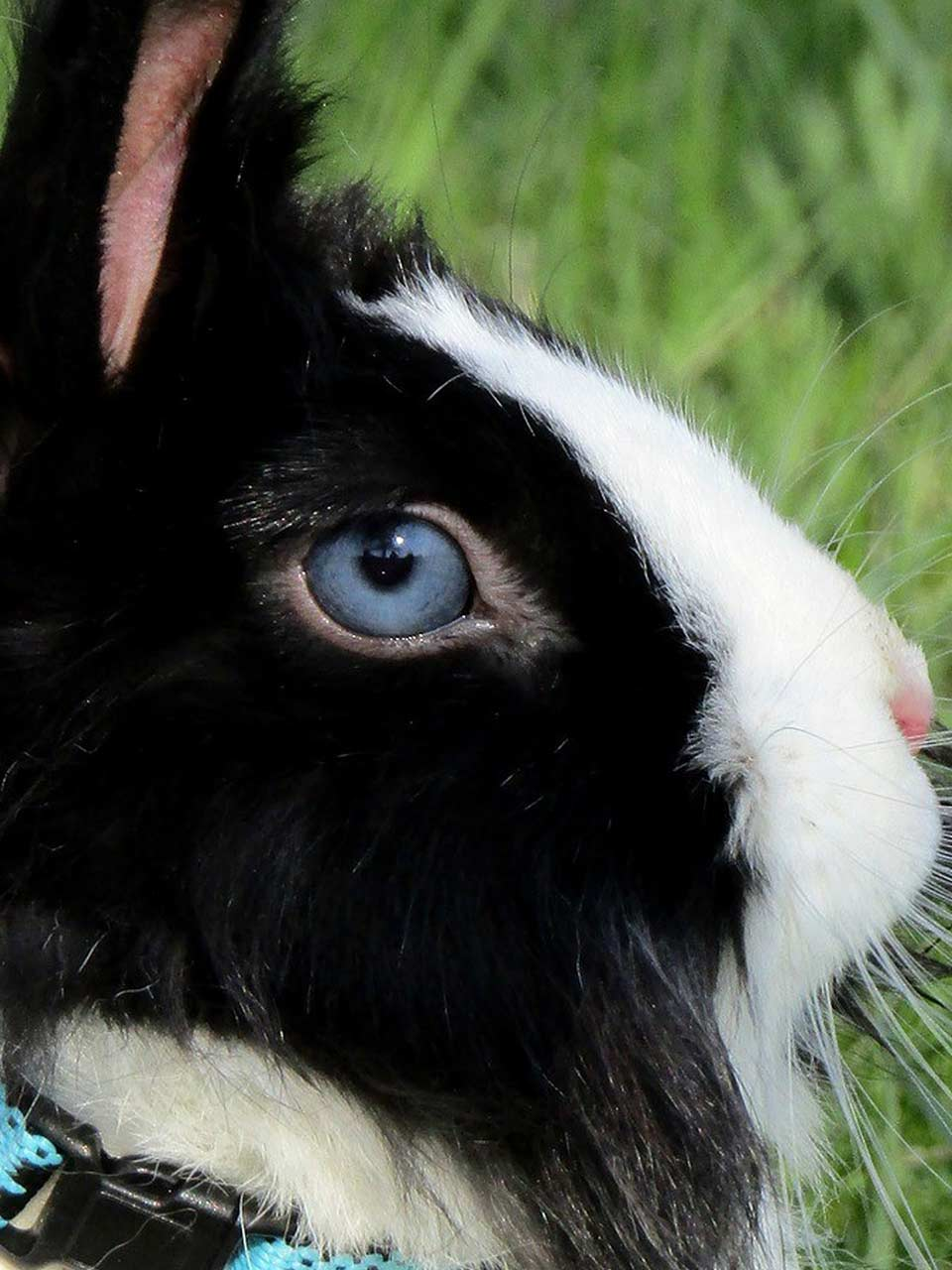 What to Do if Your Rabbit Has an Eye Infection   Petsial