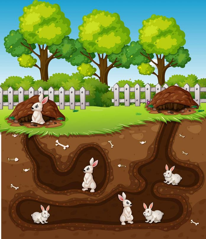 Why Do Rabbits Dig in Their Cage
