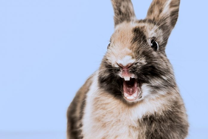 Why Do Rabbits Scream When They Die