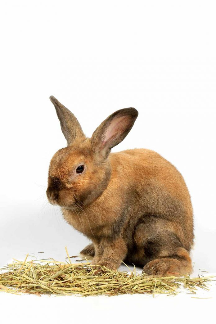 Why is Timothy Hay the Best for Your Pet Rabbit
