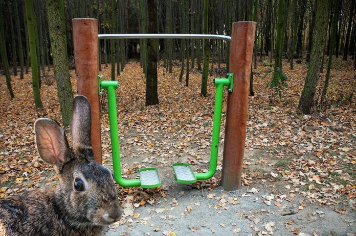 Best Rabbit Exercise Equipment