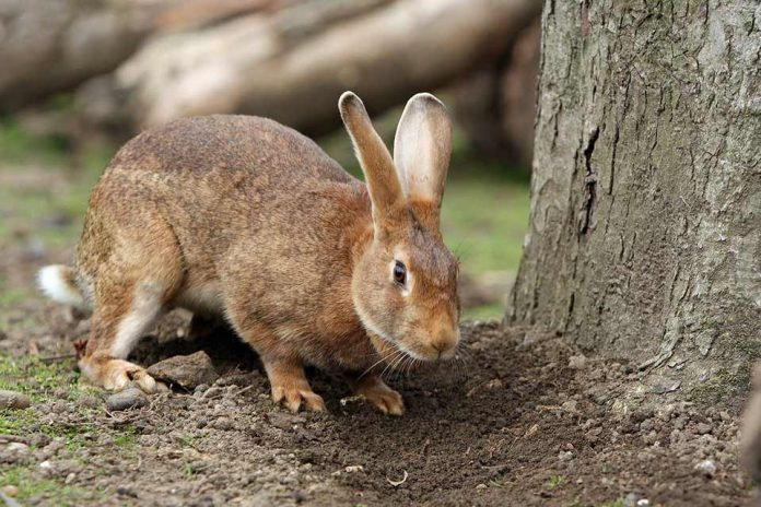 Can You Get Rabies From A Rabbit Scratch