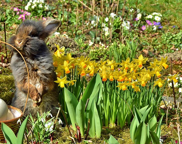 How to Keep Rabbits Away from Flowers