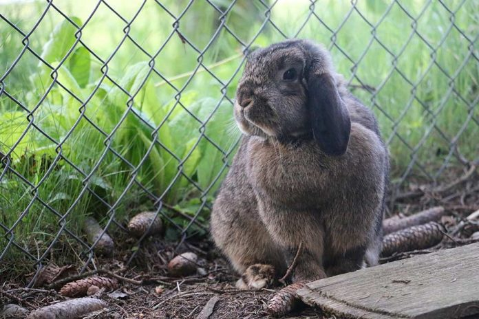 How to Keep Rabbits from Digging Under Fence