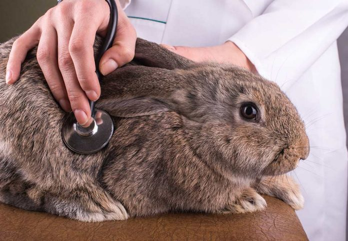 How to Treat a Sick Rabbit