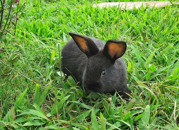 What Can Rabbits Chew on For Their Teeth