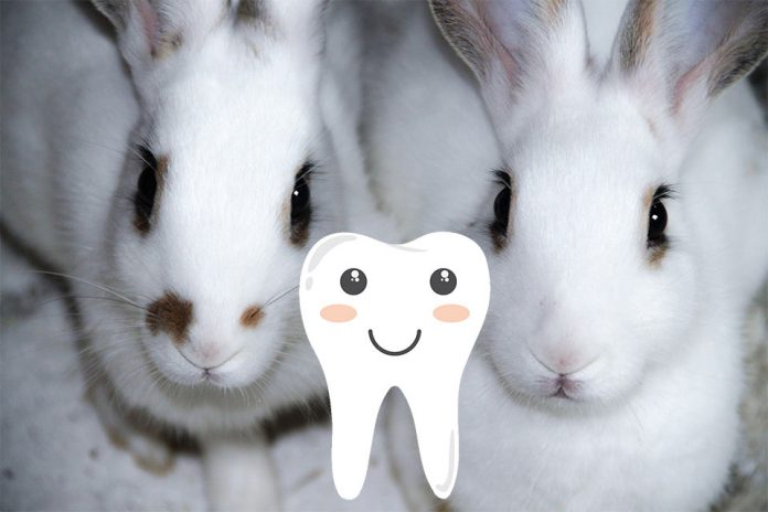 Do Rabbits Have Nerves in Their Teeth