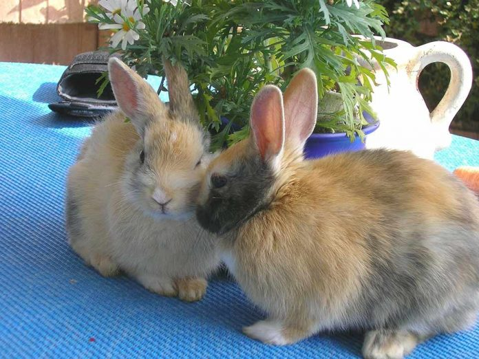 Do Rabbits Have a Good Sense of Smell