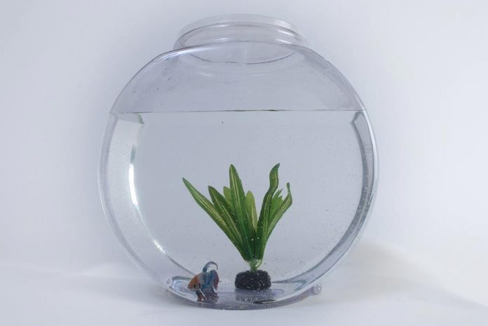 Heres Why Pet Rats Cannot Live in Fish Tanks